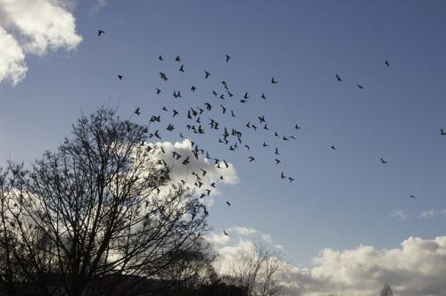 birds-351174_640